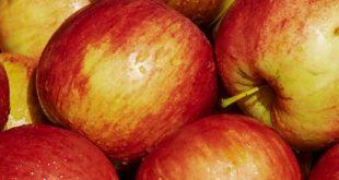 jabuka u maju