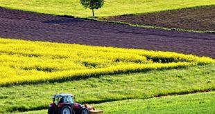 dan polja suncokret uljana repica