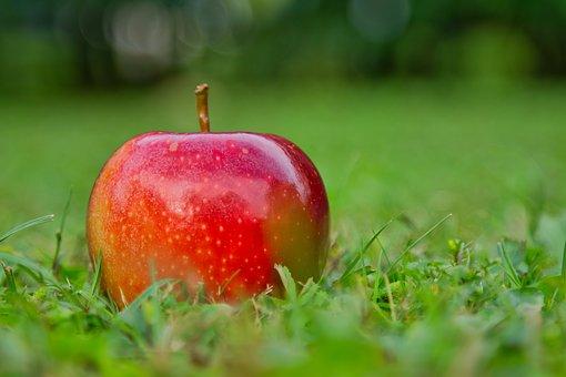 jabuka gala nova saznanja u voćarstvu